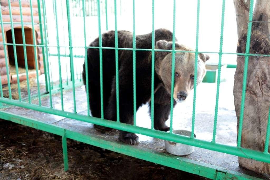 Весне дорогу: вЯрославском музее-заповеднике проснулась медведица Маша