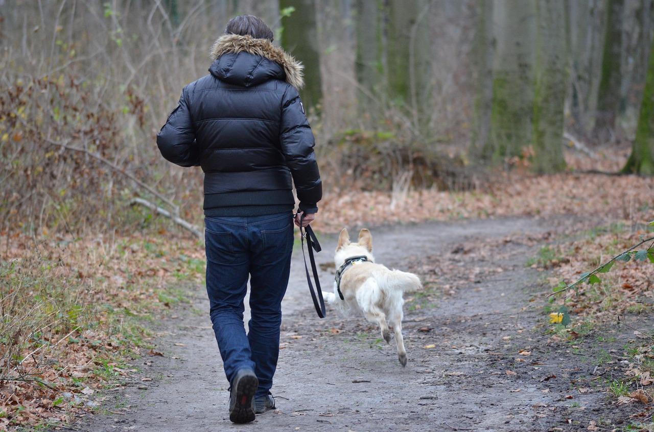 Мужчина выгуливает собаку