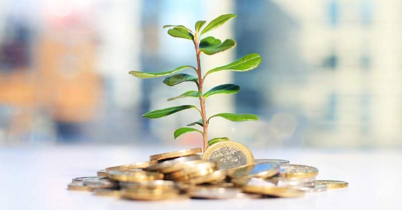 Монеты и денежное дерево