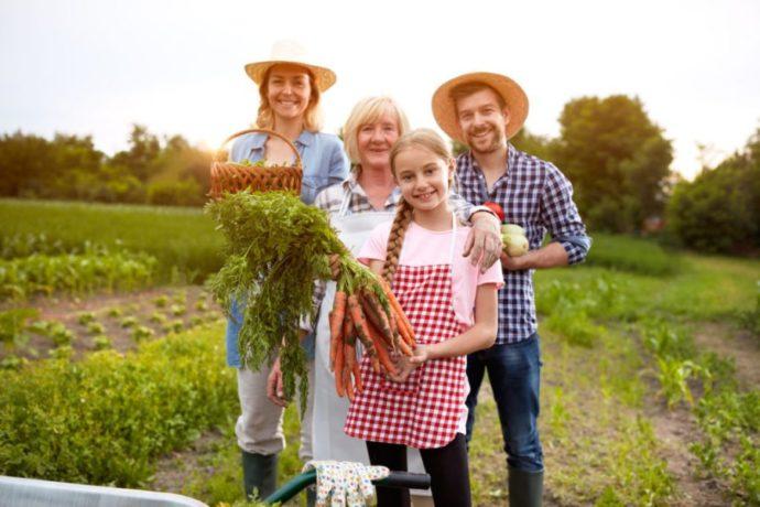 Семья в поле собирает урожай