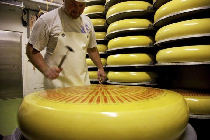 Нарезка огромной головки сыра