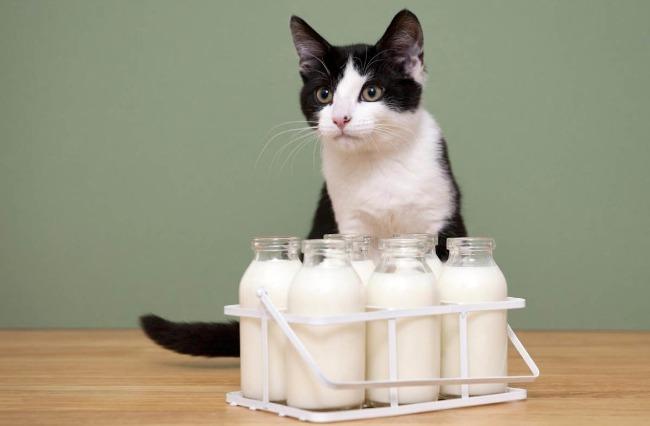 Молоко в бутылках и кошка