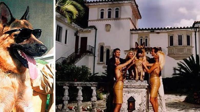 Пес Гюнтер в своем особняке с девушками