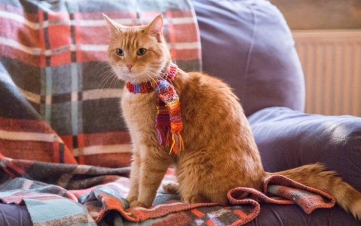 Рыжий кот в шарфике на кресле