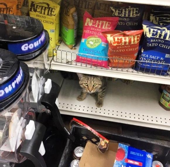 Кот на магазинной полке