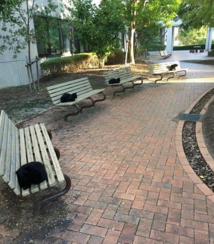 Одинаковые черные коты на скамейках