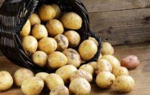 Картофель из опрокинутой корзины