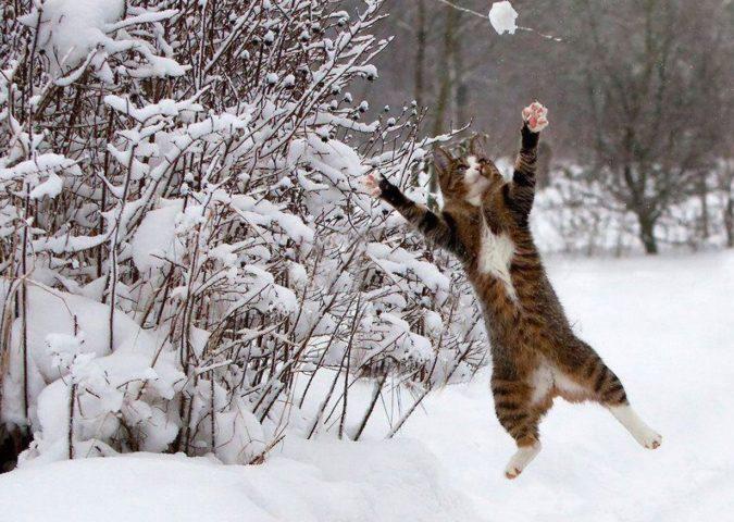 Кот и снежок