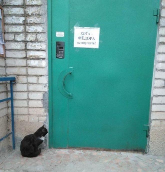 Кот под подъездом