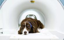 Магнитно-резонансная томография для кошек и собак